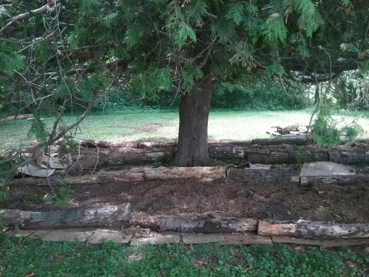 treeMushrooms1