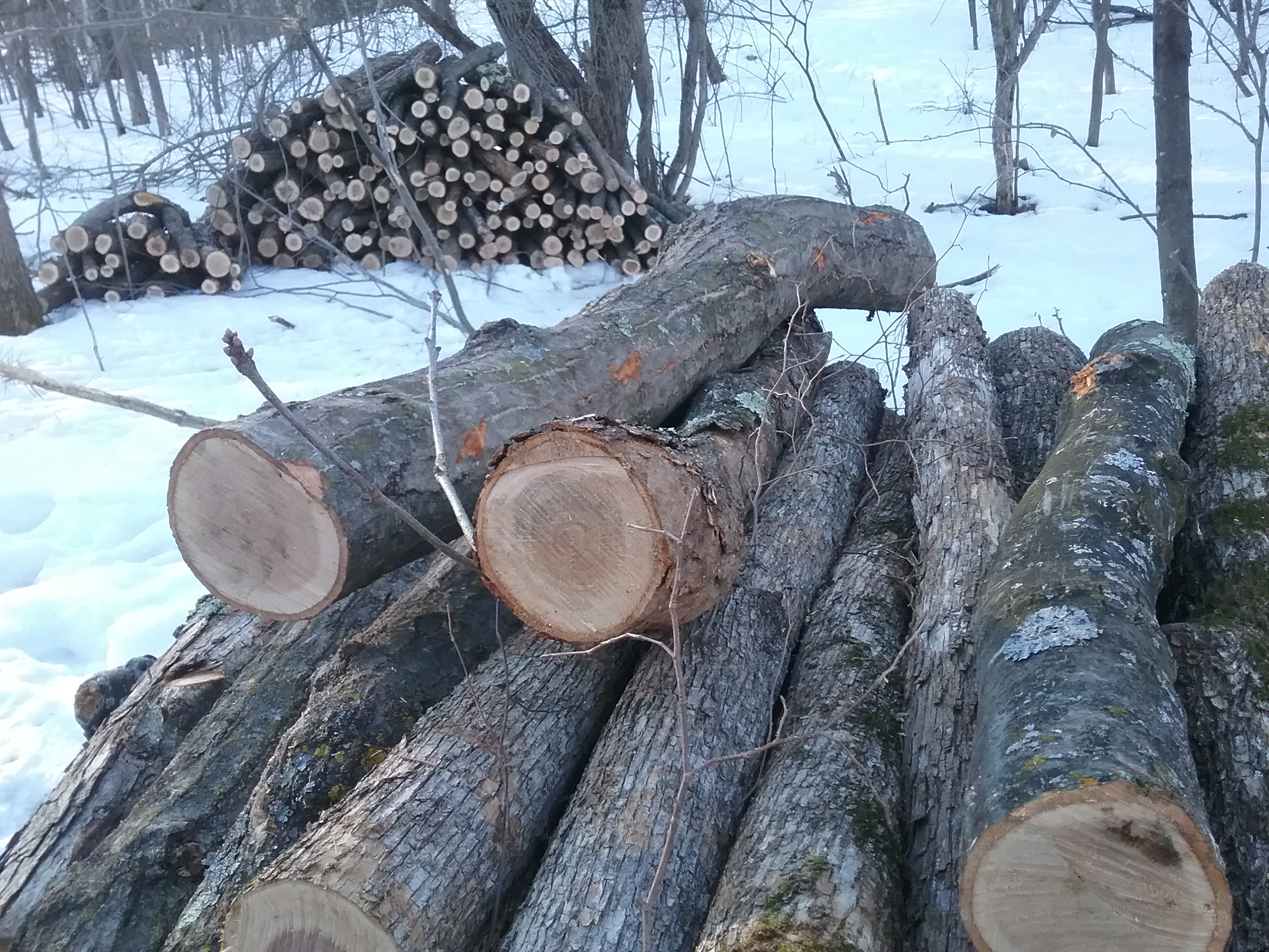 logs in woods