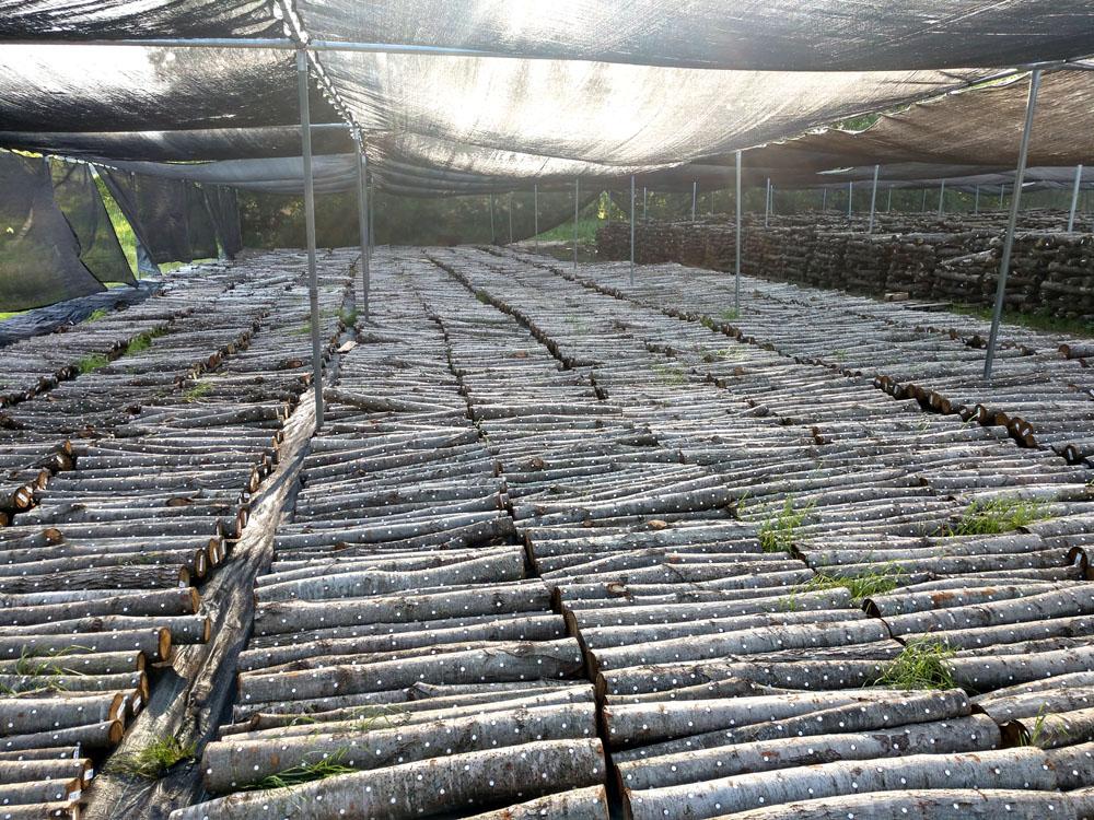 incubating logs 2019